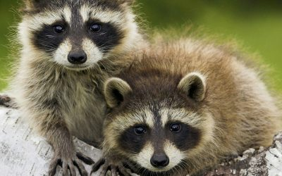 It's baby season for your local wildlife.