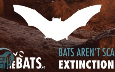 Get 'Em Out and CWF Looking for Homeowners to Participate in Bat House Study